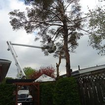 Cross Brothers Tree Service Ltd.